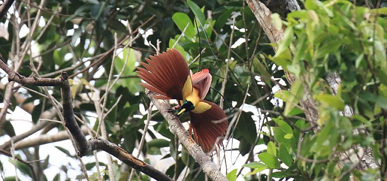 Programbild Papua